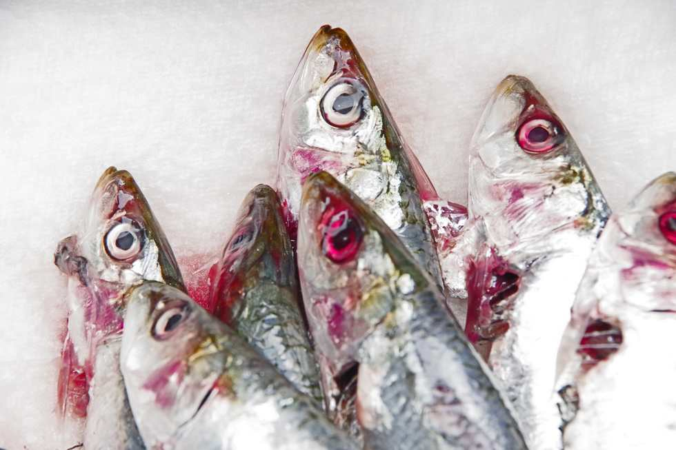 Nature morte aux sardines