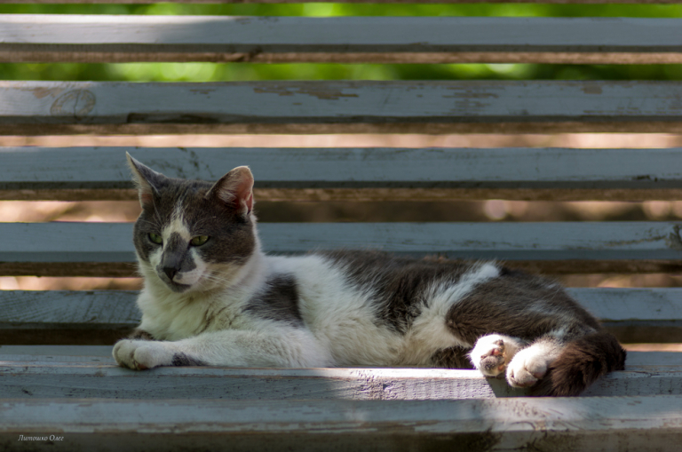 On the bench. The rest of the cat.