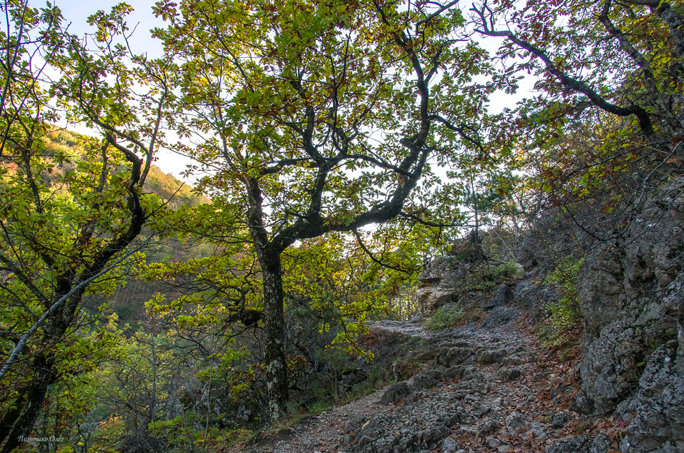 Ancient road in the mountains. Crimea.