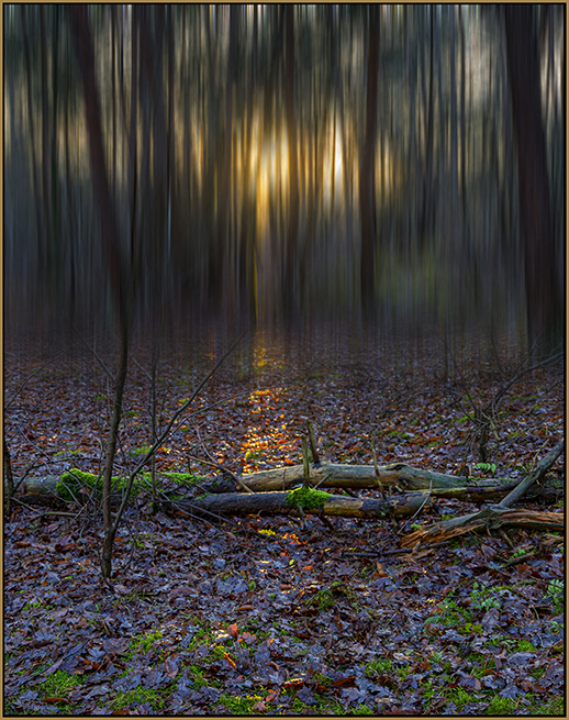 FOREST SUNSET