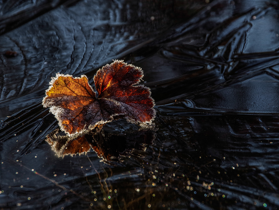 leaves on a frozen wather pond