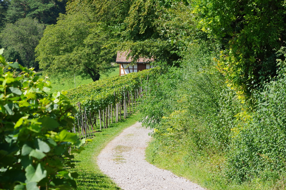Walk through the vines