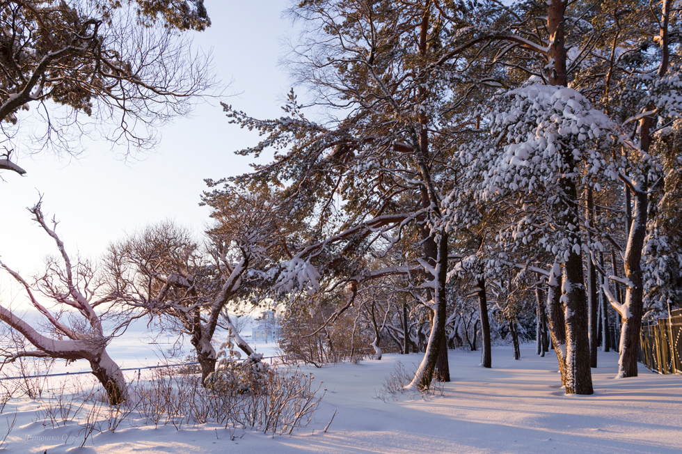 The park on the bank of the Gulf of Finland. Winter.