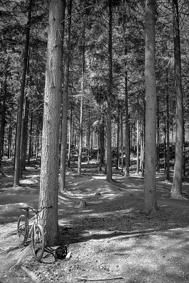 Bicycle in forest.