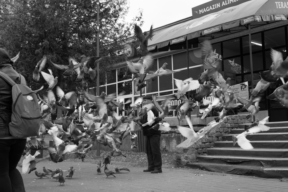 The old man and the pigeons